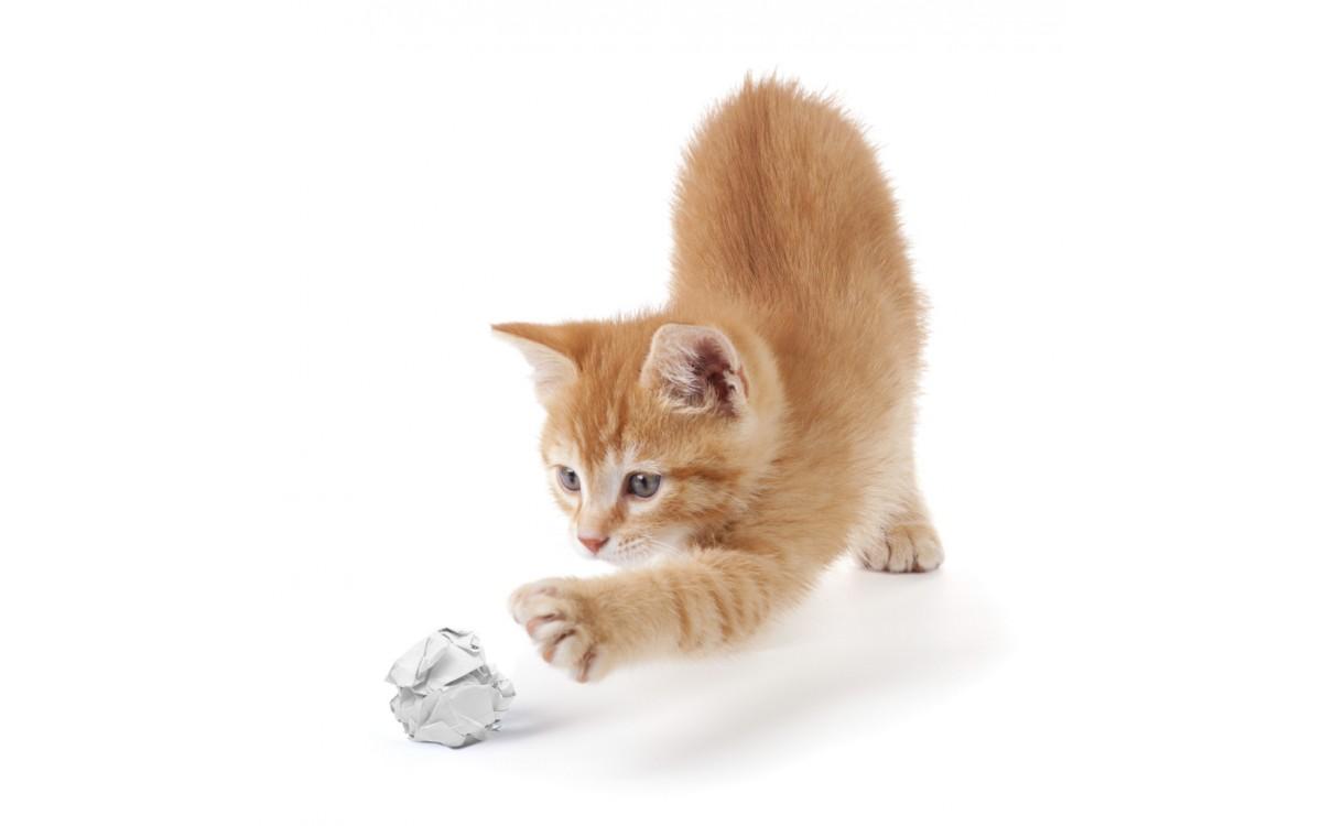 Определяне на физическото състояние на котката ви