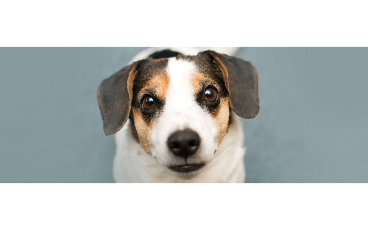 Как да поддържате кучето си здраво и жизнерадостно - Вредни вещества и храни