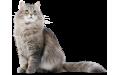 Котки (3)