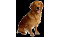 Кучета (5)