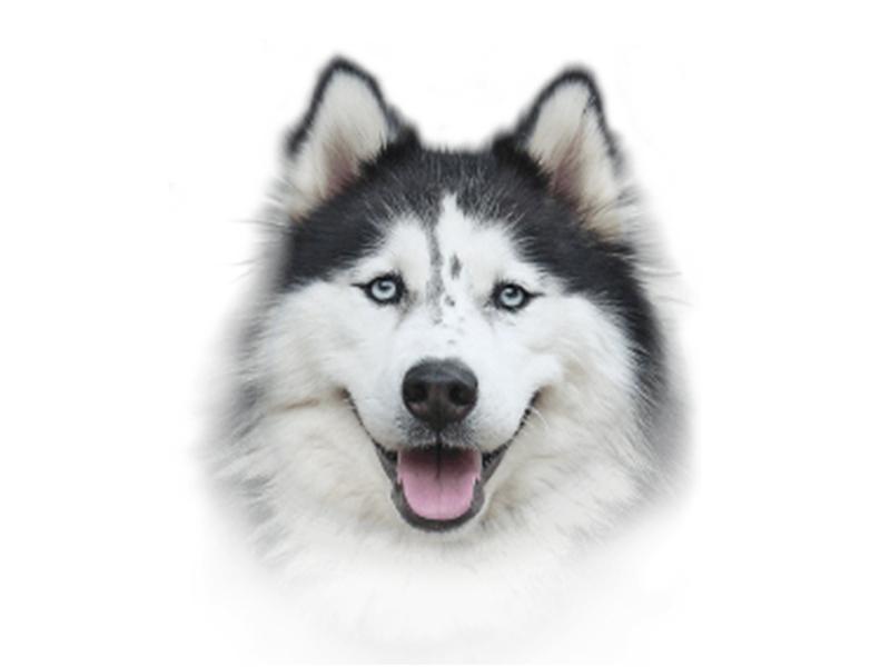 храна за кучета